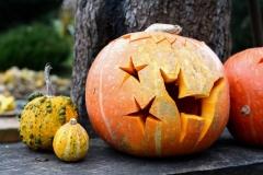 halloween_tok_cica