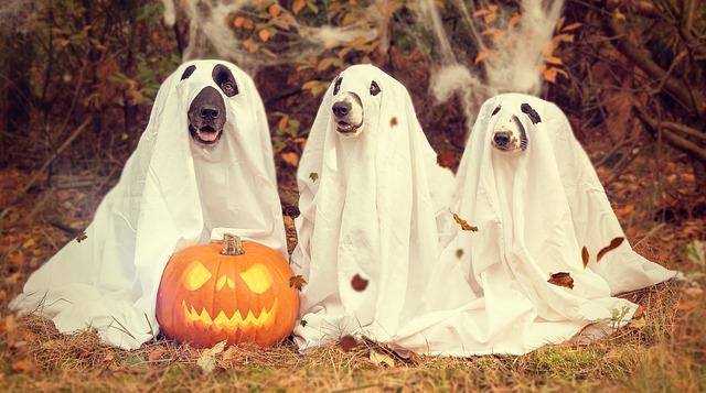 halloween jelmezek kutyák